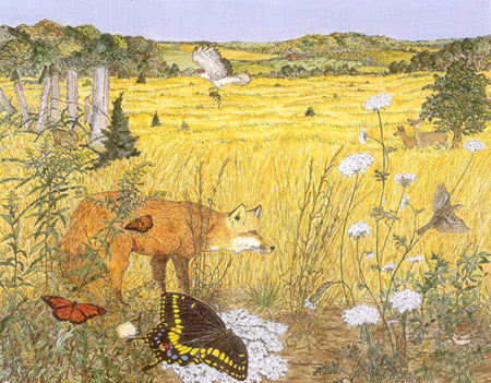 Piedmont Old Field by Anne Runyon