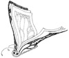 Catch the Reading Bug